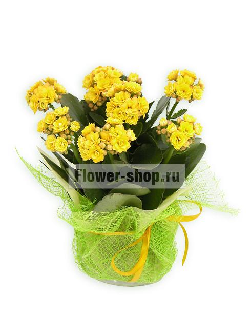 Подарок цветы горшок с фото 397
