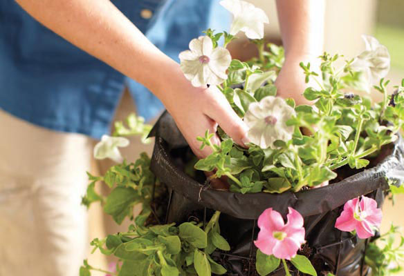 Сажаем цветы своими руками
